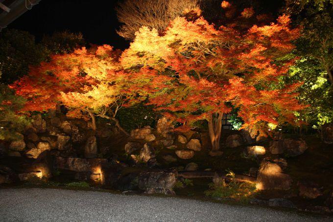 荒波に浮かぶような紅葉に、ねねの人生を重ねてみる。