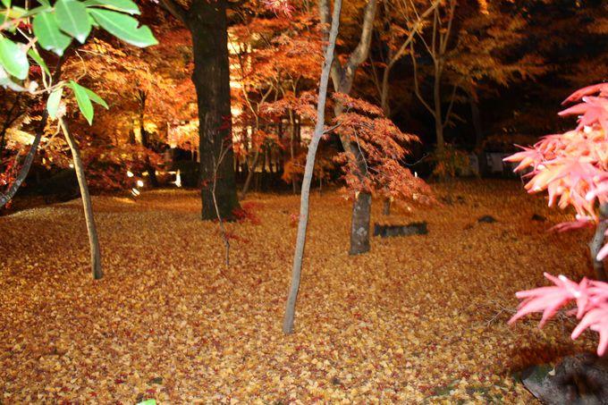 池の近くで紅葉の絨毯がき・れ・い!