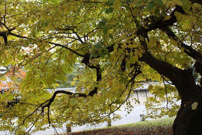 さわやかな「萌黄色」に染まる木。