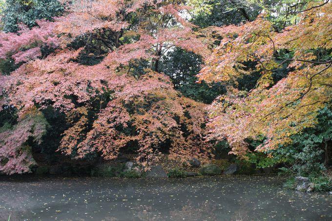「雀茶」のしたたり落ちるような葉の重なり。