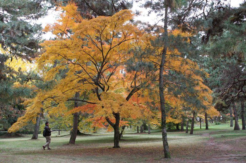 抜け道で穴場! 錦秋の京都御苑で古代色を楽しむ。