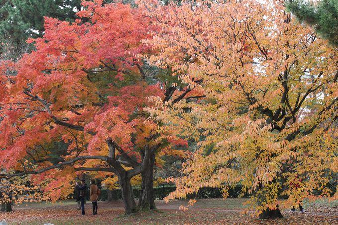 鮮やかな「紅緋」と「金茶」がわさわさと葉を揺らす姿。