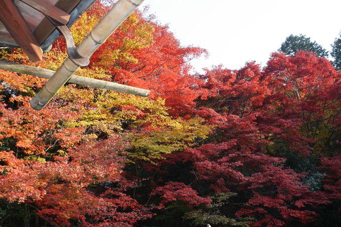 美しい紅葉と石川丈山の人生に出会う「詩仙堂」