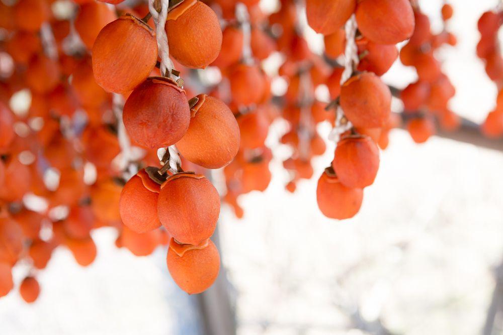 こんなお土産が欲しかった! 奈良「柿の専門」柿のイメージを一新