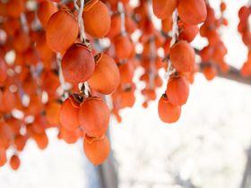 こんなお土産が欲しかった! 奈良「柿の専門」柿のイメージを一新|奈良県|トラベルjp<たびねす>