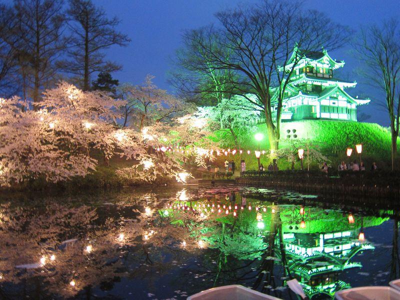 日本三大夜桜&ライトアップ夜景遺産!新潟高田公園の桜
