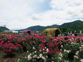 千曲川のほとりでバラを楽しむ!長野 坂城町「さかき千曲川バラ公園」|長野県|トラベルjp<たびねす>