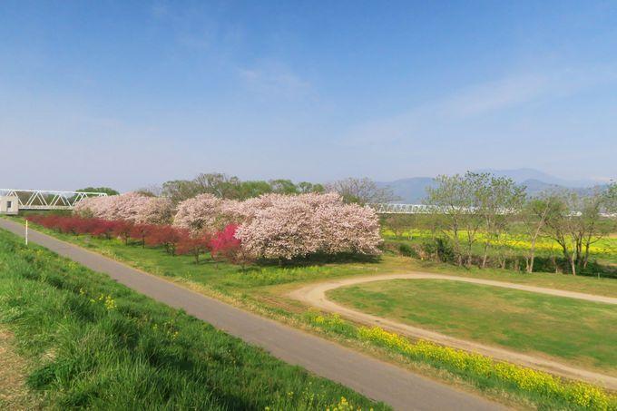 千曲川河川公園ってこんな所