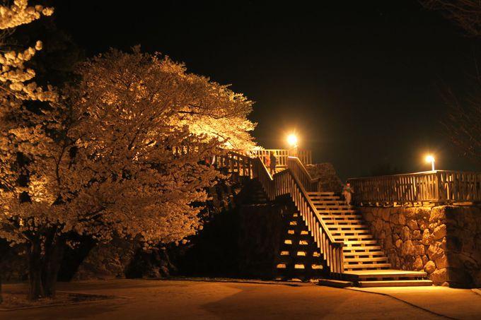 幕末の風情と桜を一緒に堪能!「松代城跡」の桜はライトアップもオススメ!