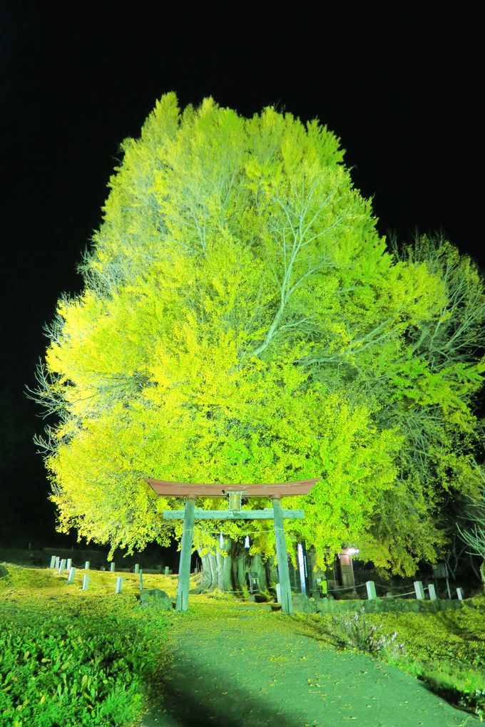 ライトアップ、グリーンシーズンもオススメ!