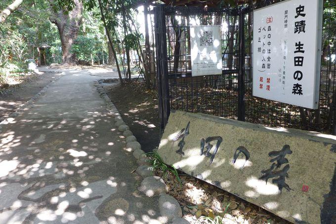 都会のオアシス生田の森