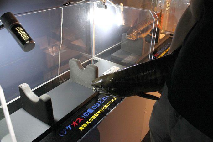 日本初の透明プールで、タッチ体験!