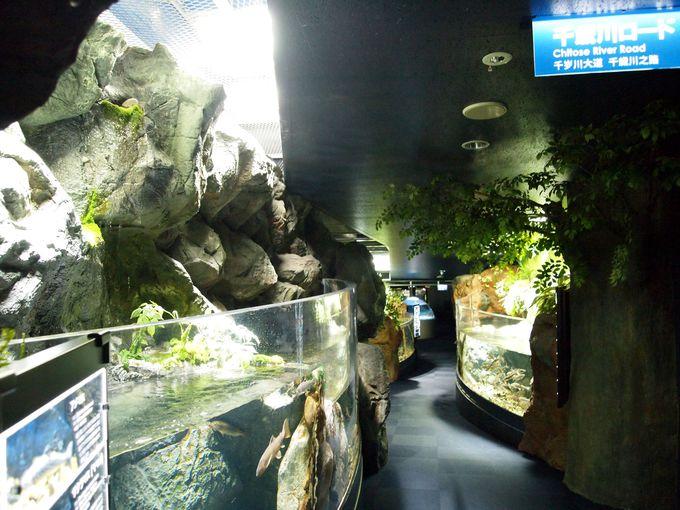 千歳川ロードで千歳に生息する魚に詳しくなっちゃおう!