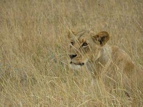 動物好きのためのケニア・ナイロビ観光スポット3選