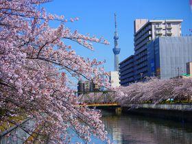 超穴場!深川・清澄白河は運河に桜がこぼれるように咲き誇る東京のベニス