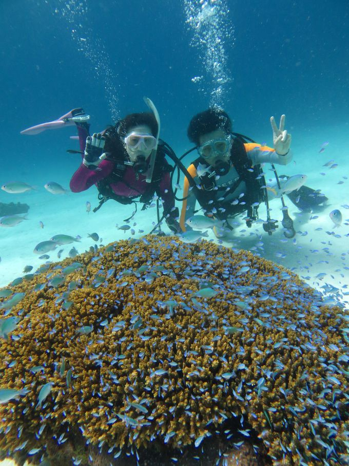 ストレスフリーな慶良間諸島のダイビング