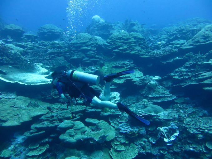 いざ、コスラエの大海原へ、Dive!