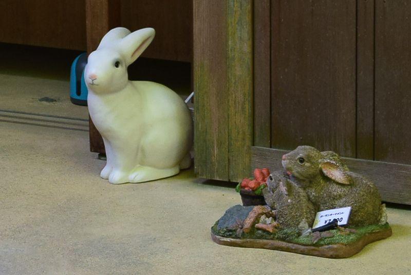 悟りが開けたらウサギさんに癒されよう