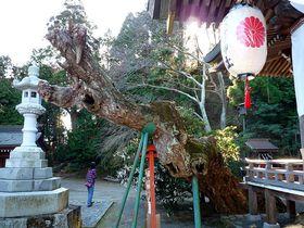 木は気に通じる!いわき市の知られざるご神木パワースポット|福島県|トラベルjp<たびねす>