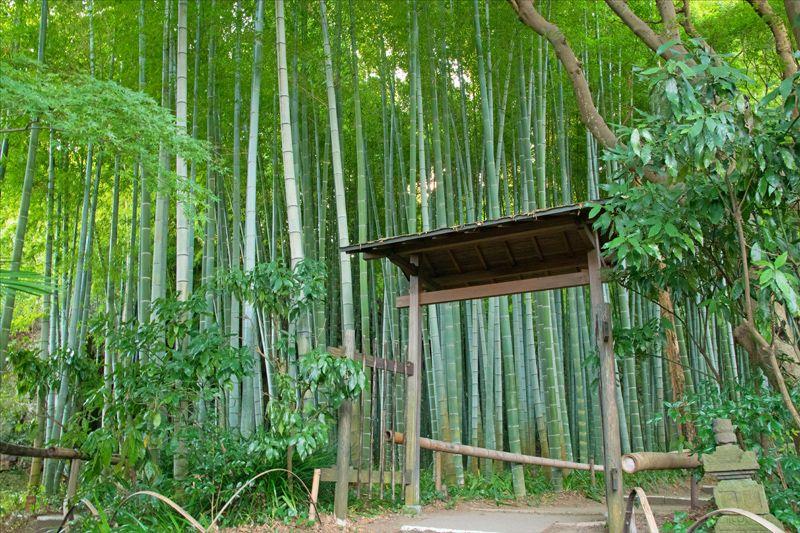 元祖女子力の伝説!鎌倉唯一の尼寺・英勝寺で女子力UPしませんか