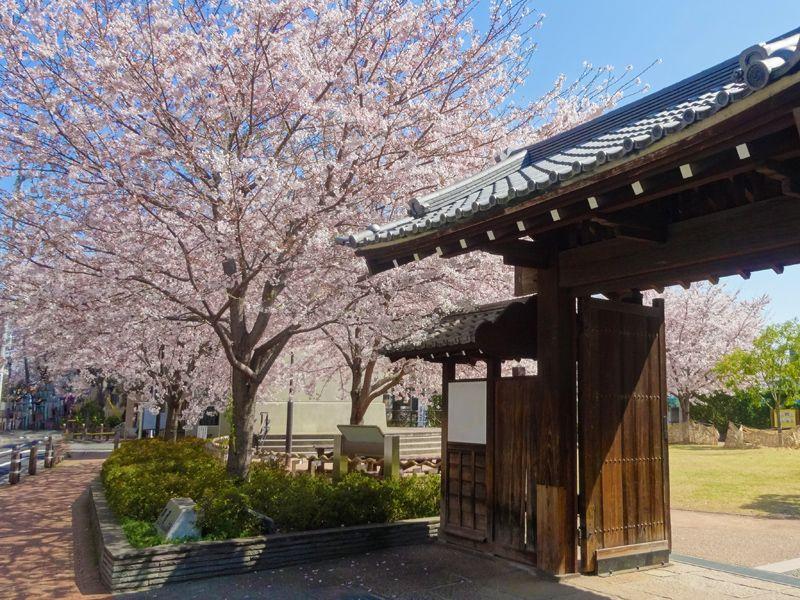 ソメイヨシノの植木屋