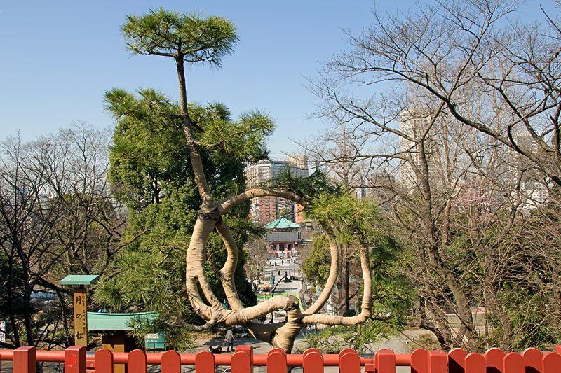 """150年ぶりに復元された""""月の松""""も必見!上野「清水観音堂」"""