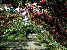 北関東最大級のバラ園!前橋市「敷島公園ばら園」の楽しみ方|群馬県|トラベルjp<たびねす>