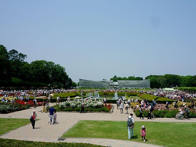 世界が称賛したバラ園!調布・神代植物公園の「バラフェスタ」