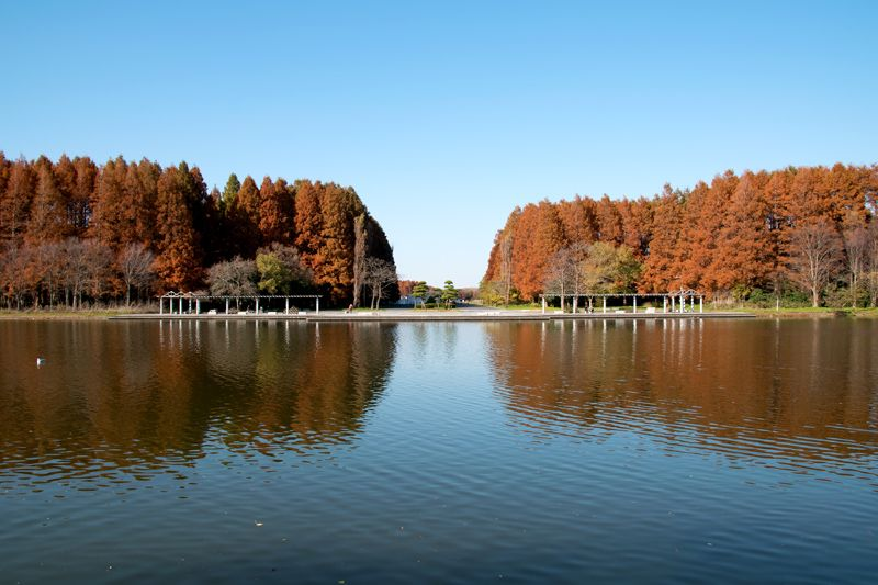 都内で唯一の水郷公園