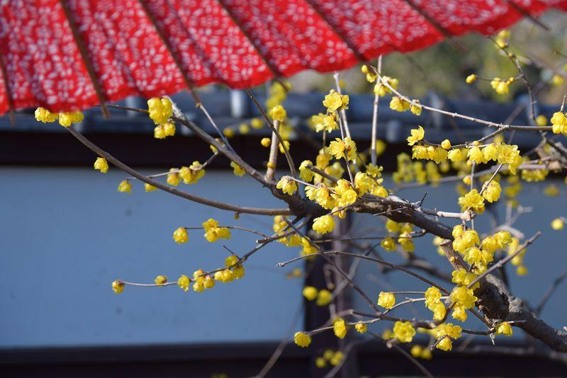 春の訪れを感じる苑内