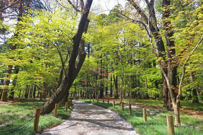 散策に好適な境内林