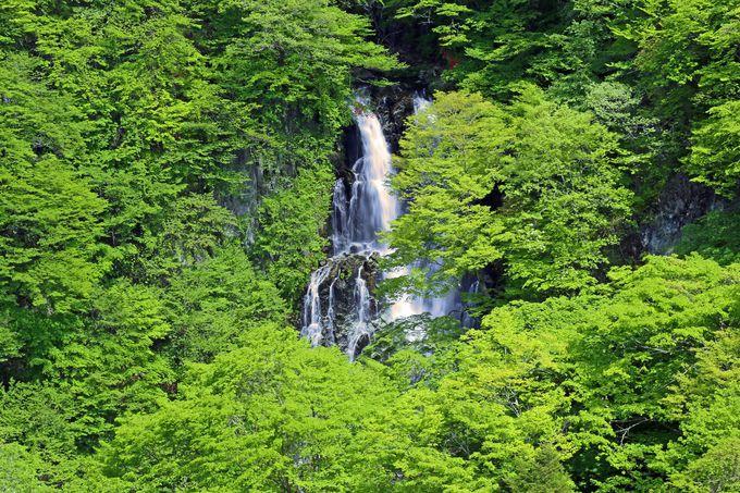 緑の中に佇む霧降の滝