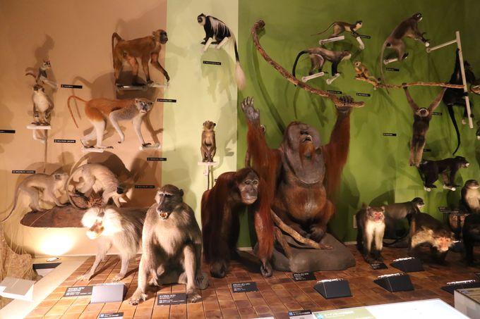 身近な動物も数多く並んでいます