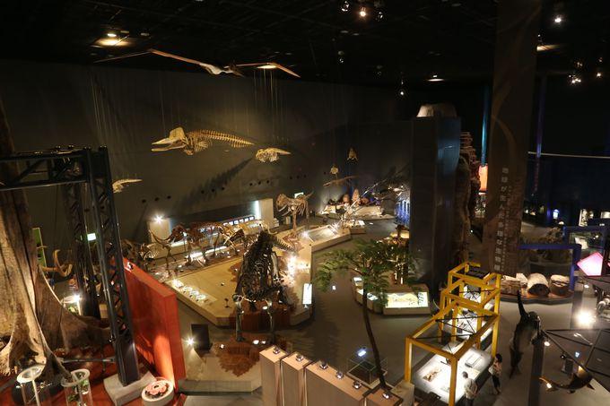 さまざまな展示物が地球の長い歴史を教えます