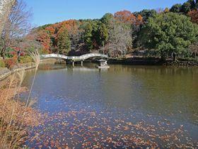 大都会の中に自然が残る魅惑のスポット!町田市「薬師池公園」|東京都|トラベルjp<たびねす>