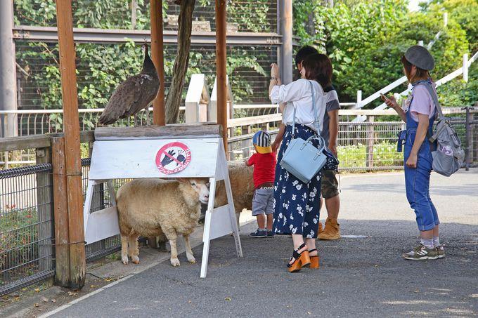 動物との触れあいが楽しめる「どうぶつ広場」