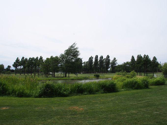 サッポロさとらんどの「風のはらっぱ」は、広々とした草原が心地いい!