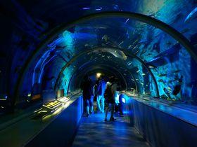 まさに北欧の世界!お城の水族館「登別マリンパークニクス」