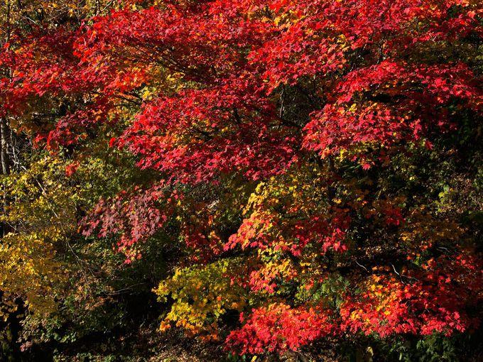 山の中で鮮やかに色づく紅葉