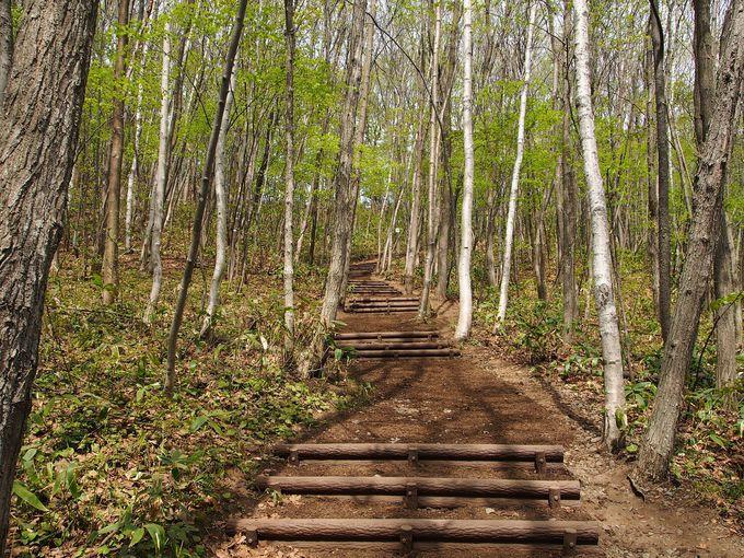森林浴を楽しめる遊歩道