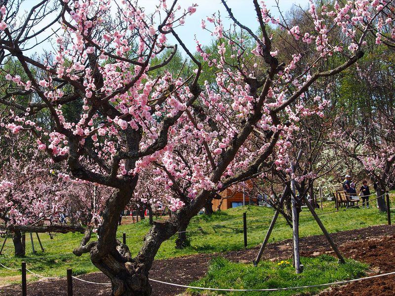 散策シチュエーションが豊富!北海道札幌市の「平岡公園」