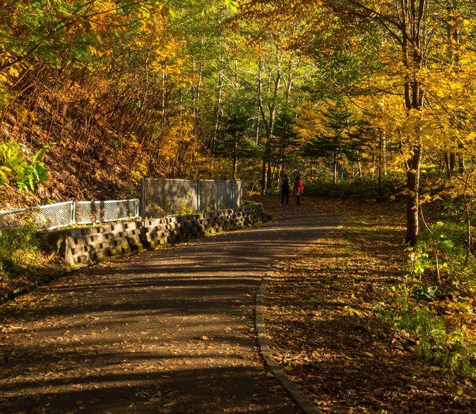 紅葉を楽しみながら、豊平峡ダムの遊歩道をのんびり歩こう