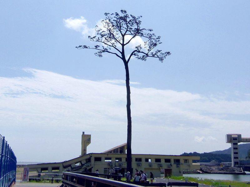 大スケール復興事業中〜陸前高田のシンボル「奇跡の一本松」