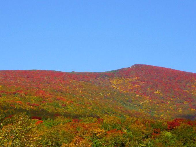 紅葉で真っ赤になる「東栗駒山」は一見の価値あり!