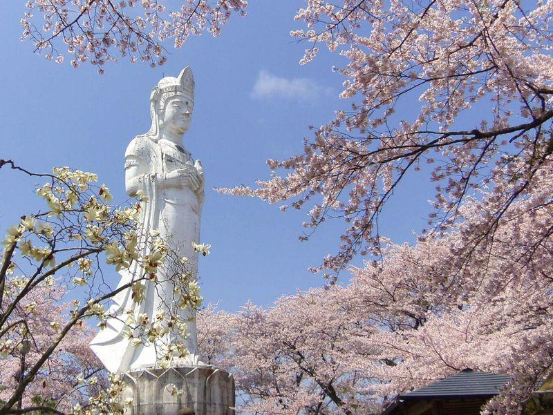 頂上では〜桜に囲まれた白亜の平和観音像がお出迎え
