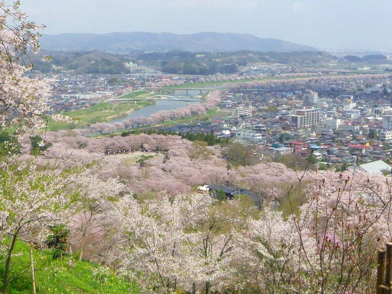 頂上からは〜2名所の千本桜を見渡す事ができます!
