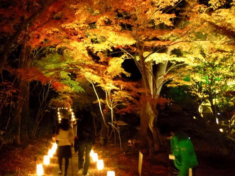 松島で秋の夜長をしっとり満喫!「円通院」紅葉ライトアップ