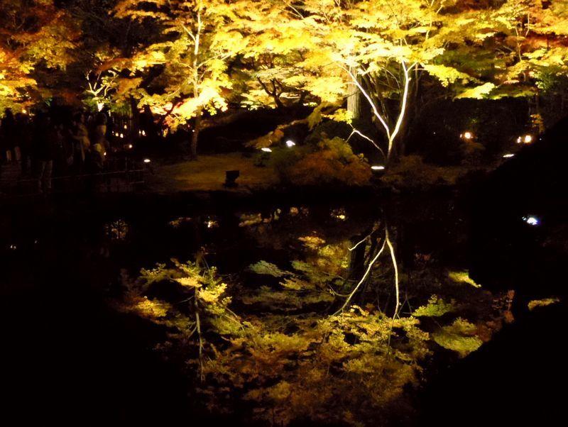 夜だけ見える!「円通院」一番人気の紅葉スポット
