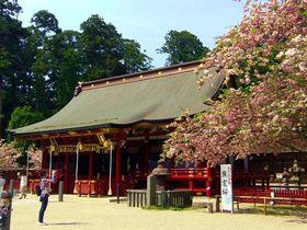 東北を代表するパワースポットは桜の名所!宮城「鹽竈神社」|宮城県|トラベルjp<たびねす>