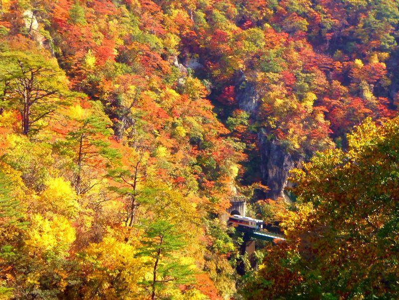 鳴子峡名物!紅葉に覆われた鉄橋を渡るローカル列車